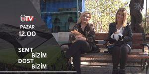 Beşiktaş TV, hayvan hakları için kolları sıvadı